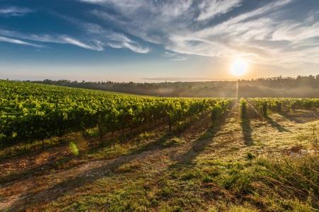 tuscany-grape-field-nature-51947.jpeg